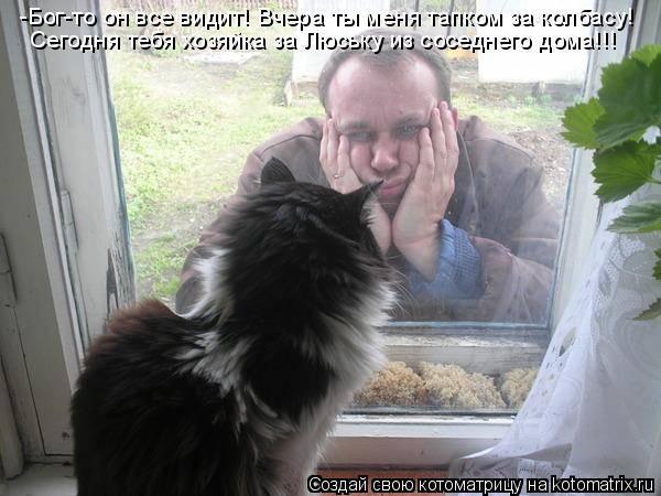 Что делать, если кошка просит кота: лучшие советы и средства
