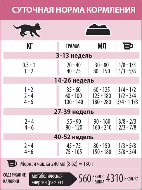 Сколько раз в день кормить кошку: правила питания