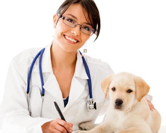 Ветеринарные клиники москвы: цены и отзывы