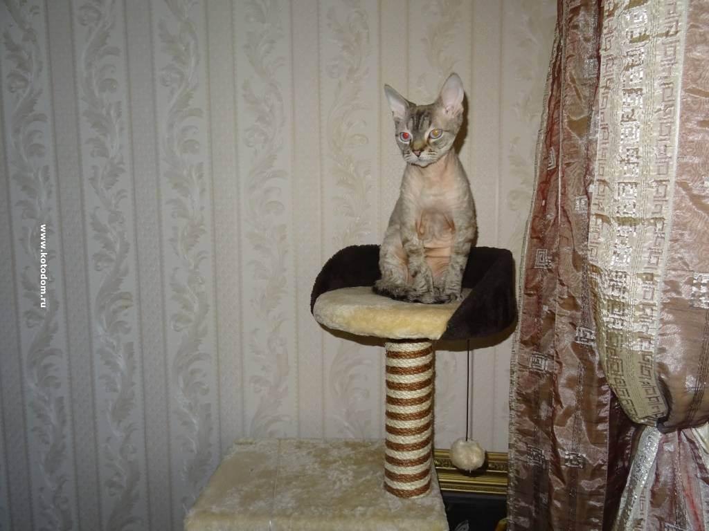 Котенок ест наполнитель для туалета это опасно