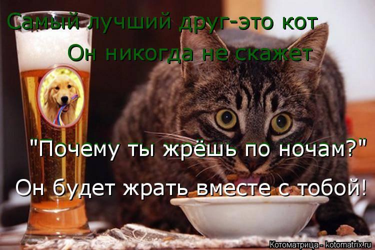 Почему кошка постоянно просит есть – даже если не голодна