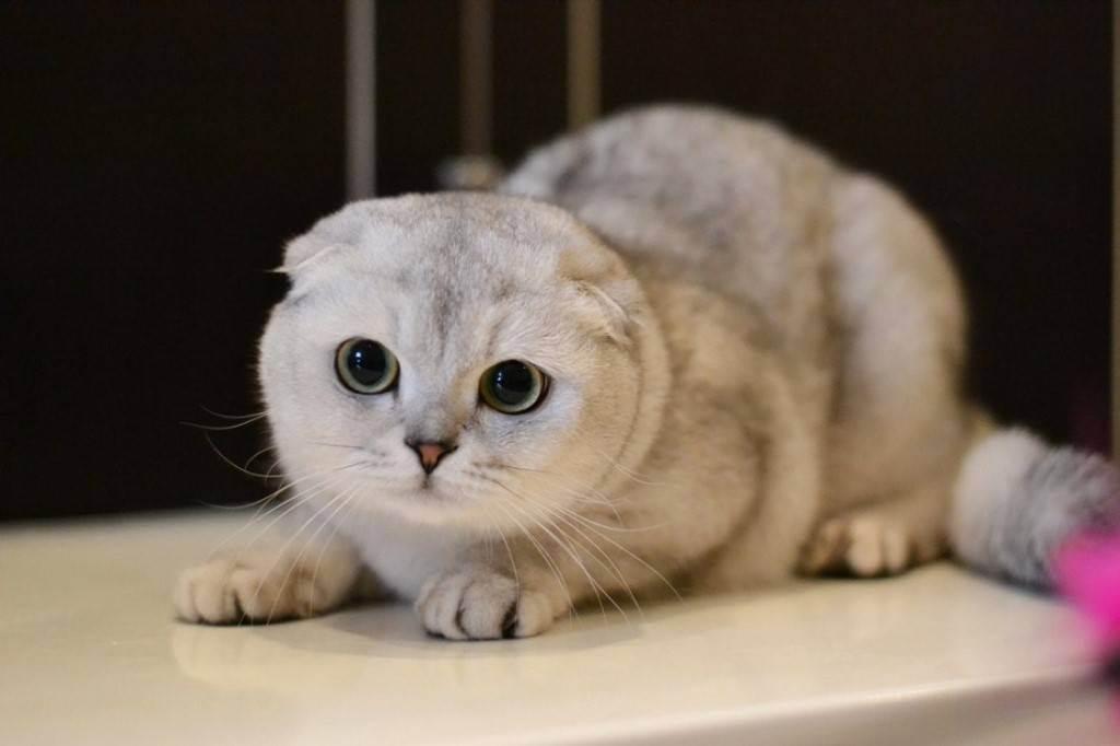 Аллергия на кошек – в чем кроется настоящая причина, и что делать?