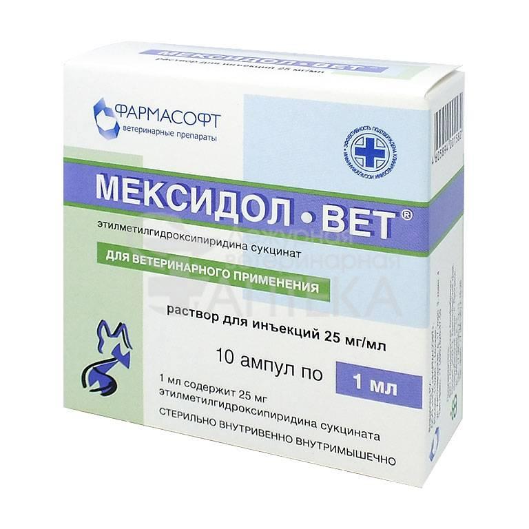 Мексидол вет для собак: инструкция по применению и аналоги - kotiko.ru