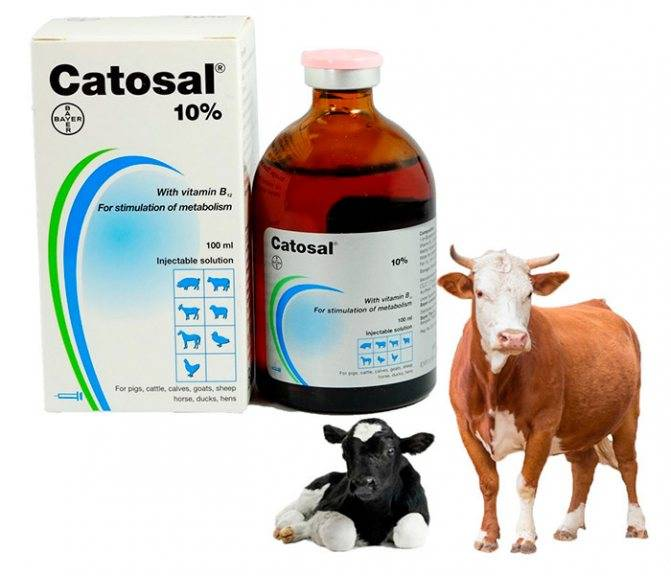 Препарат для животных катозал: состав и показания, инструкция по применению, аналоги катозала и отзывы