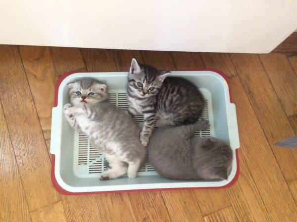 Десять причин, почему кошка не ходит в лоток - новости о кошках