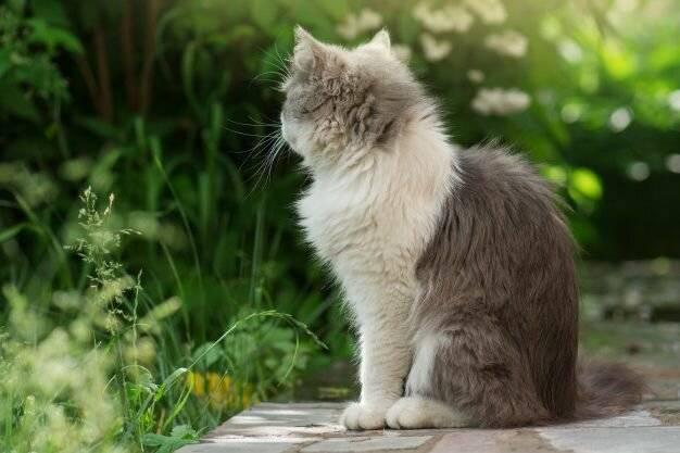 Что делать если вас укусила кошка