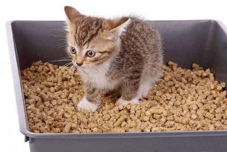 Почему котенок мяукает, когда ходит в туалет?