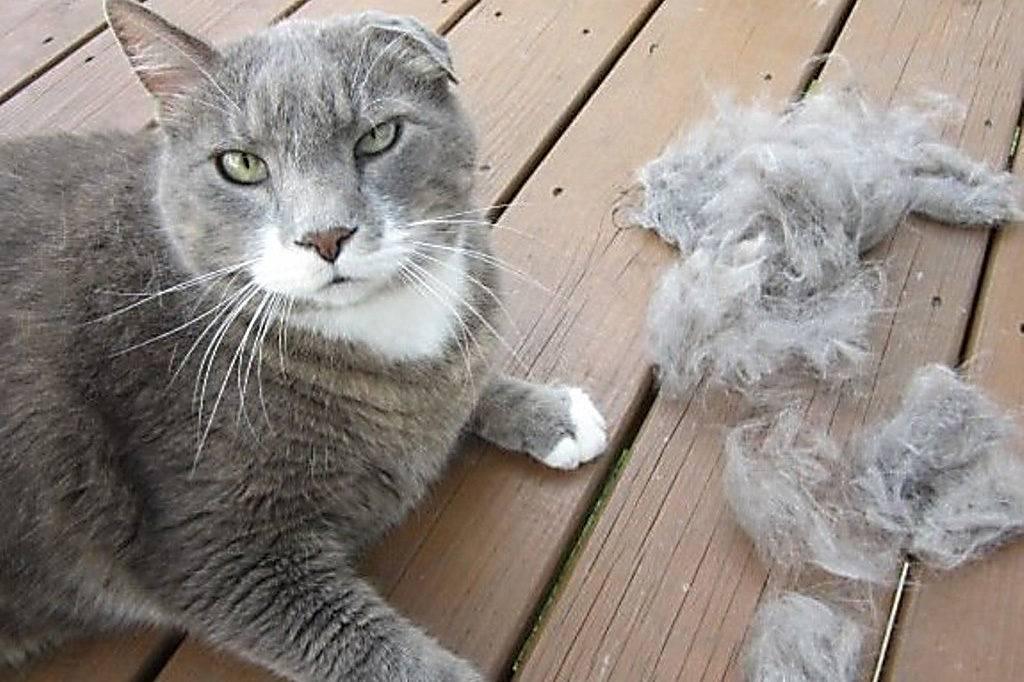 Кошка сильно линяет: что делать в таких ситуациях