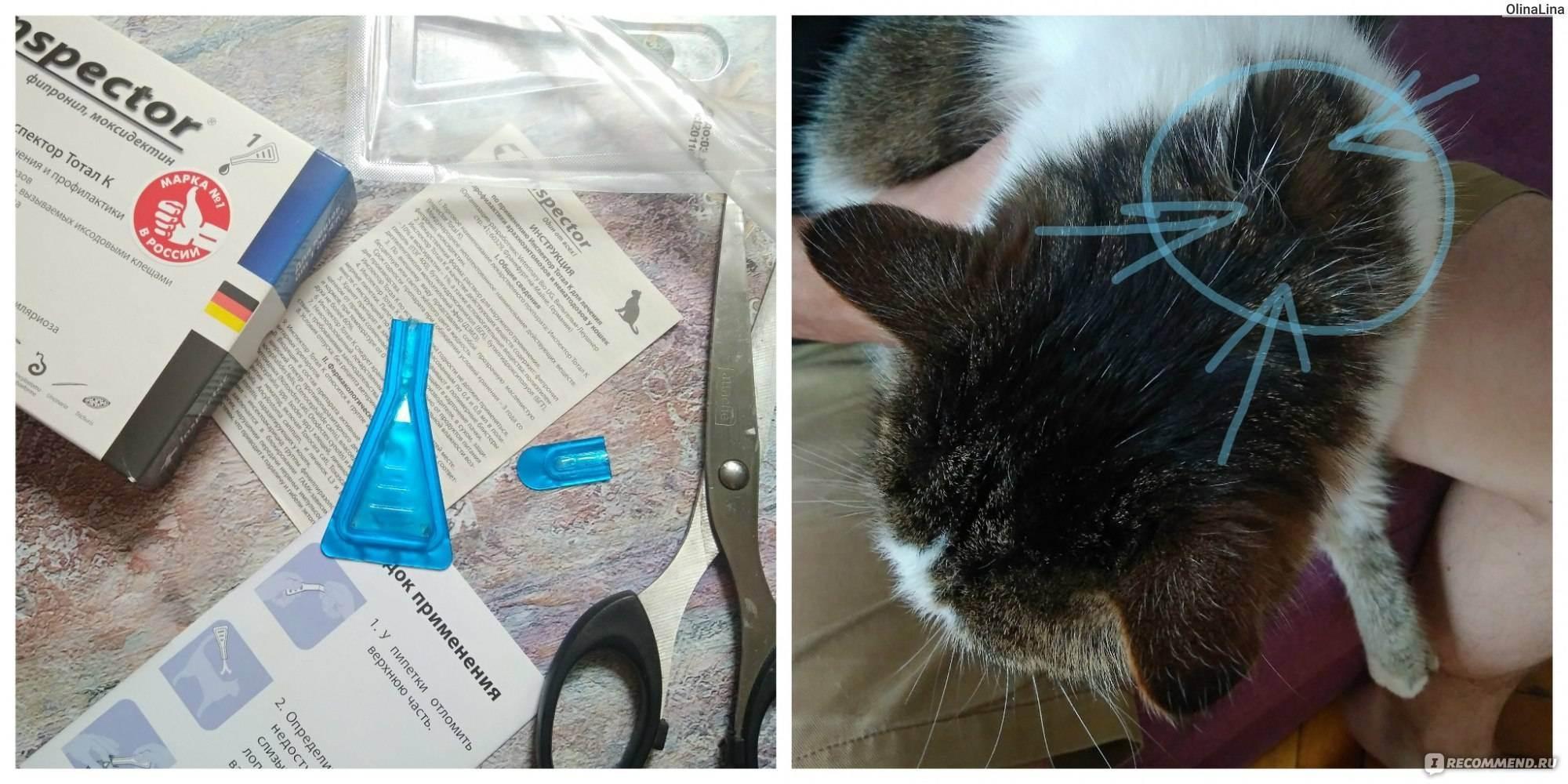 Выбираем капли от блох для котят и кошек