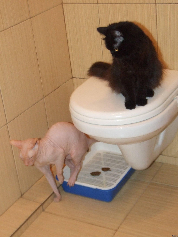 Кошка не может сходить в туалет по большому: что делать, проблемы после операции, больше 3 дней