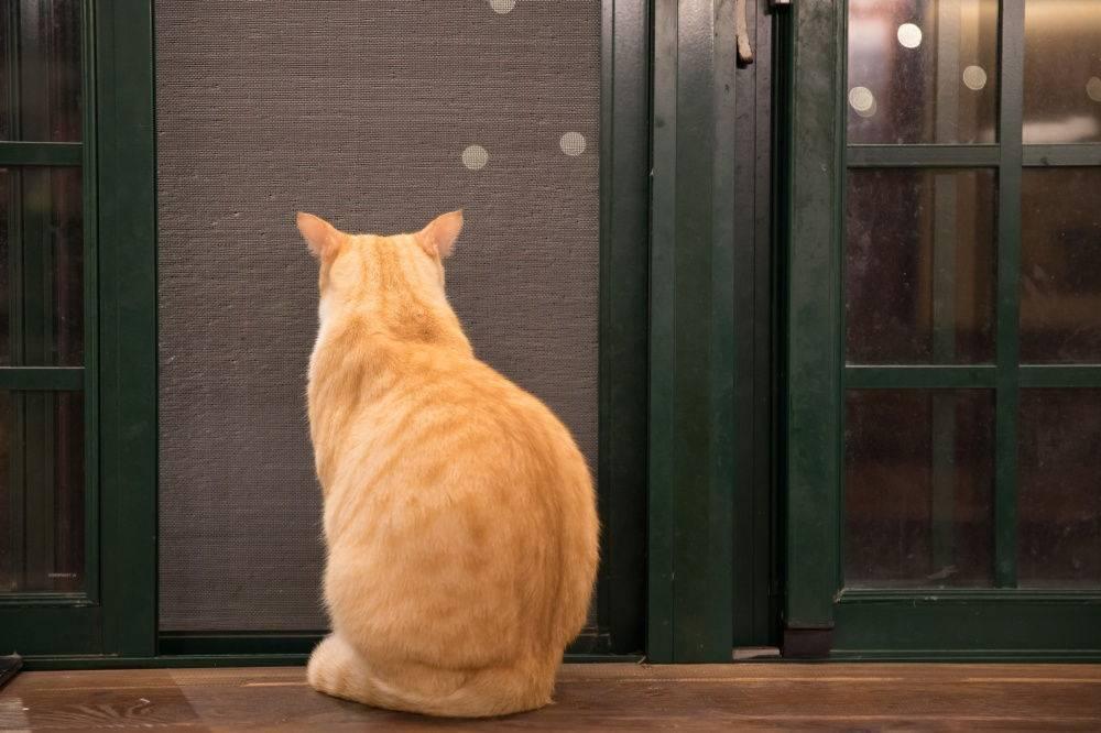 Почему кот смотрит в одну точку