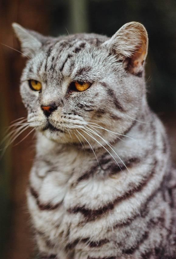 Как дать горькое лекарство кошке???