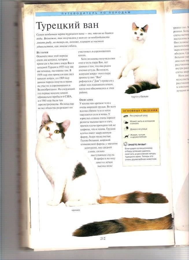 Турецкий ван — кошка, которая обожает воду