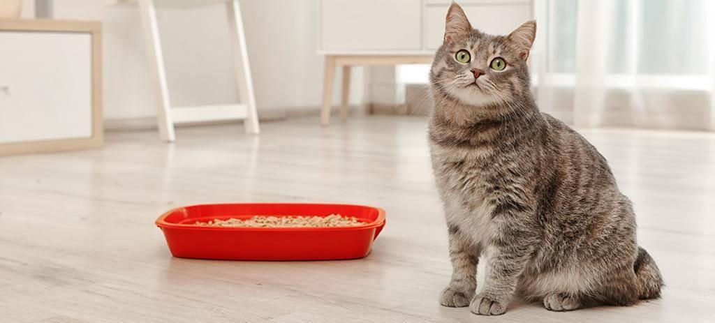 Как отучить кошек и котов лазить по столам