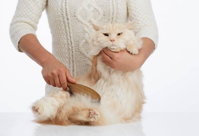 Как вывести шерсть из желудка кошки в домашних условиях, что делать если она не может отрыгнуть?
