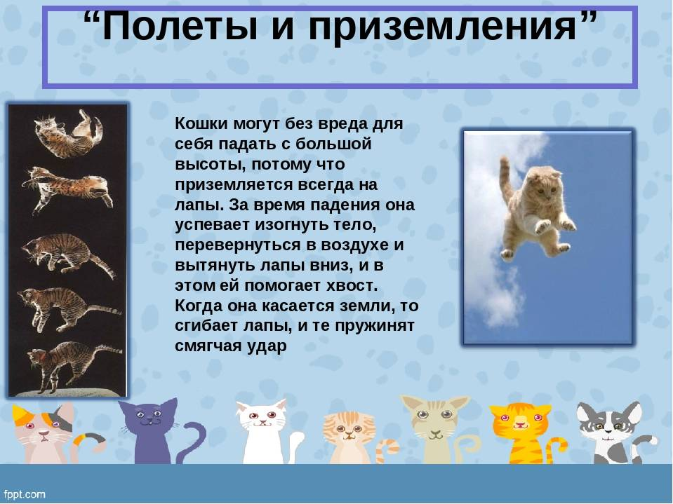 У кошки от стресса отказали задние лапы