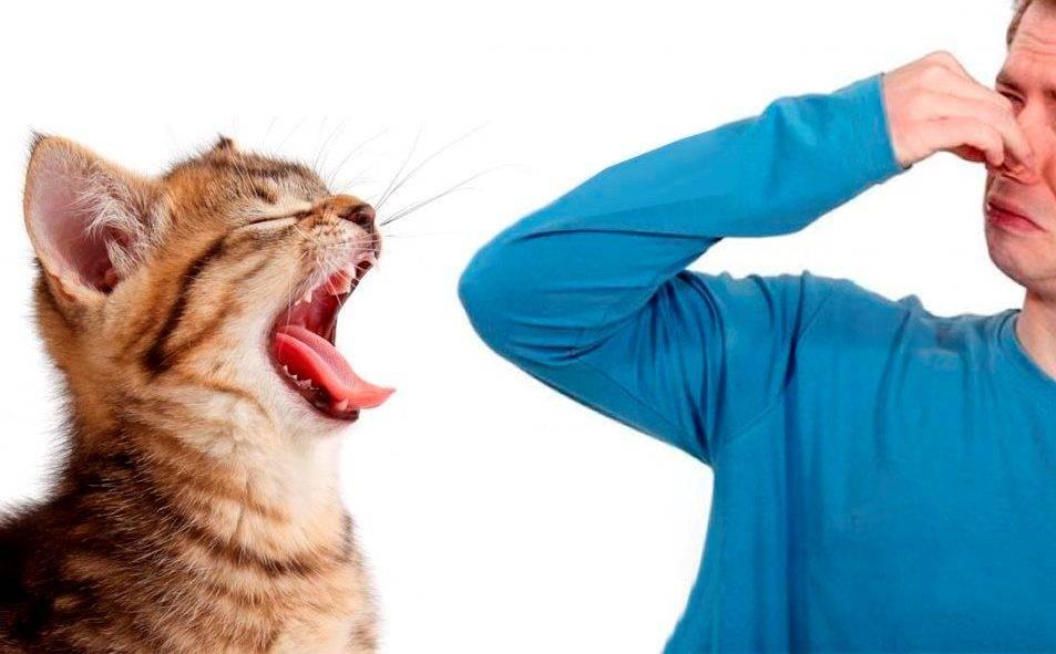 Почему у кошки пахнет изо рта – pet-mir.ru