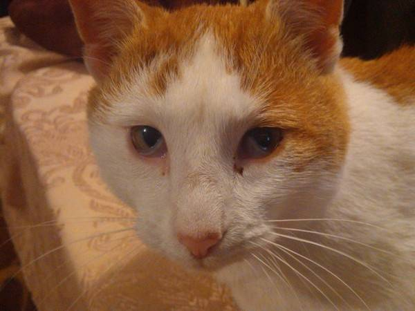 Почему у кота заплывают глаза. почему у кошки глаза наполовину закрыты пленкой? почему у кошки образуется пленка на глазах
