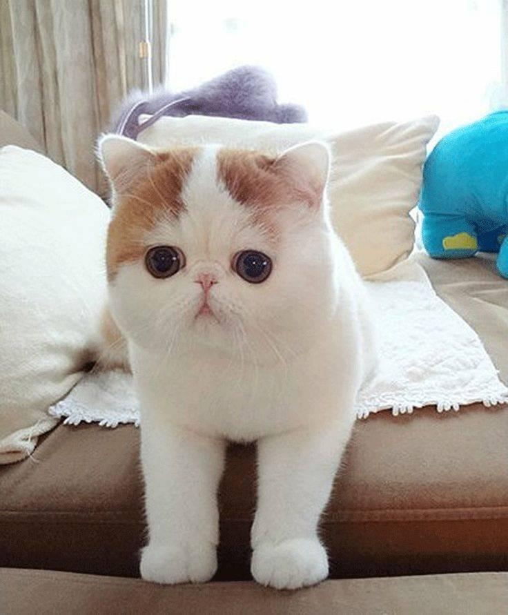 Топ 10 самые красивые породы кошек в мире