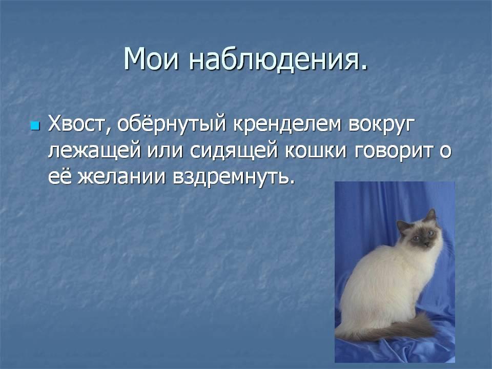 С давних времен люди интересуются зачем котам хвост и наблюдения облегчат поиски ответа