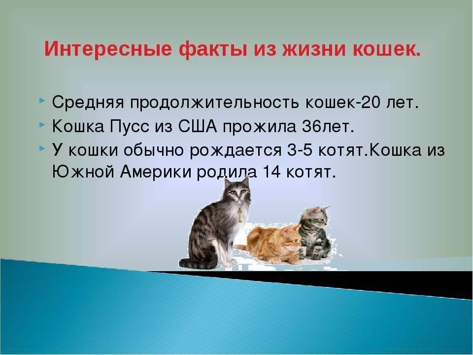 Какова средняя продолжительность жизни кошек и котов дома: таблица
