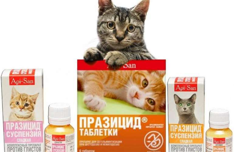 Обзор препарата празител для кошек и котят: инструкция по применению, отзывы