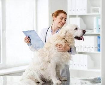 Ветеринария в москве - цены и отзывы