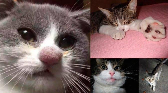 Кошку укусила оса: первая помощь при укусе и дальнейшее лечение пушистика