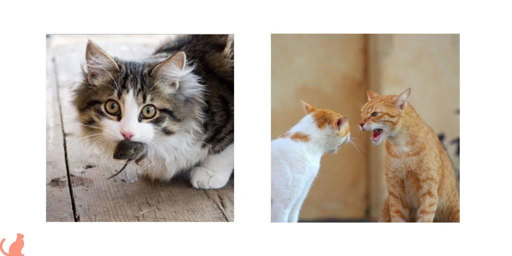 Симптомы бешенства у кошек на ранних сроках: первые признаки в различных формах заболевания