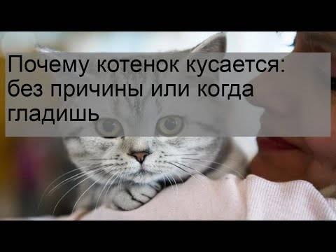 Почему кот кусает за ноги хозяйку: когда гладишь и без причины