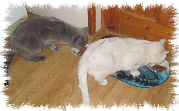 """Как ухаживать за беременной кошкой?     блог ветклиники """"беланта"""""""