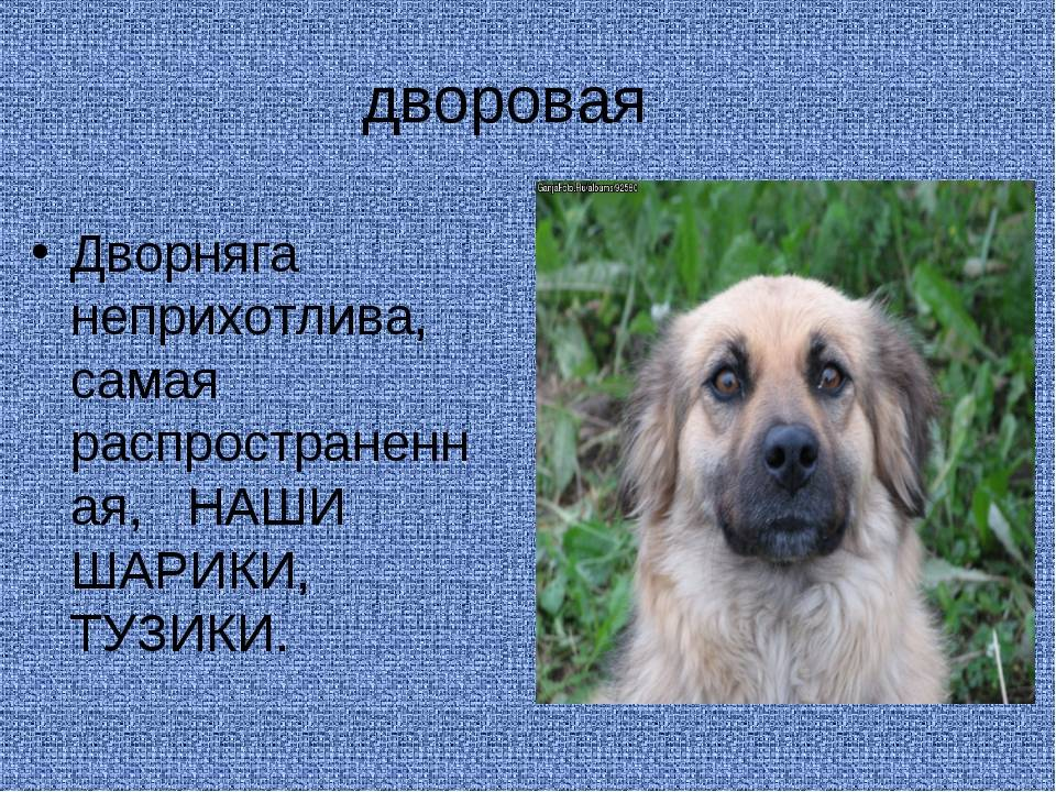 Собака дворняжка — все о беспородных дворнягах и их щенках, фото, отзывы