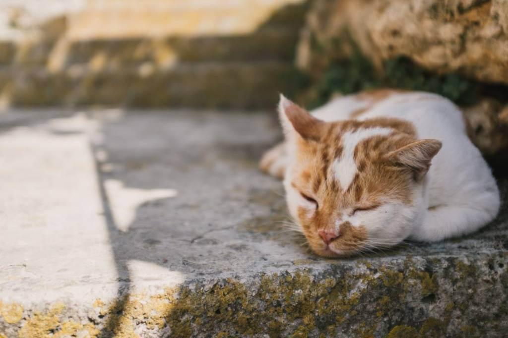 Солнечный, тепловой удар у собаки, кошки, что делать, профилактика. тепловой удар у собаки собака перегрелась на солнце что делать