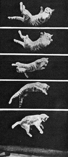 У кошки отказали задние ноги: причины и что делать