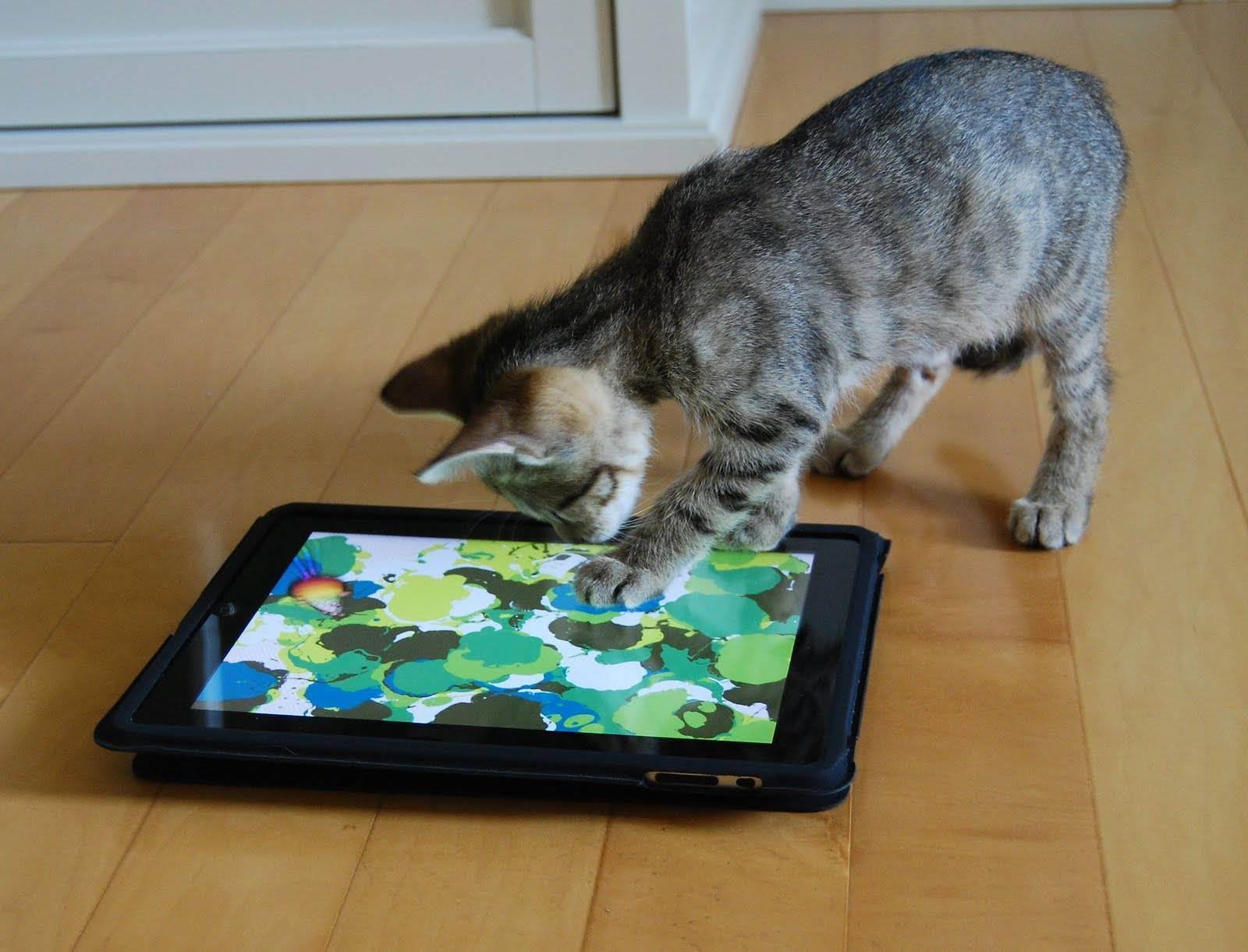 Игрушка для кошек на ipad. лучшие ipad-приложения для кошек