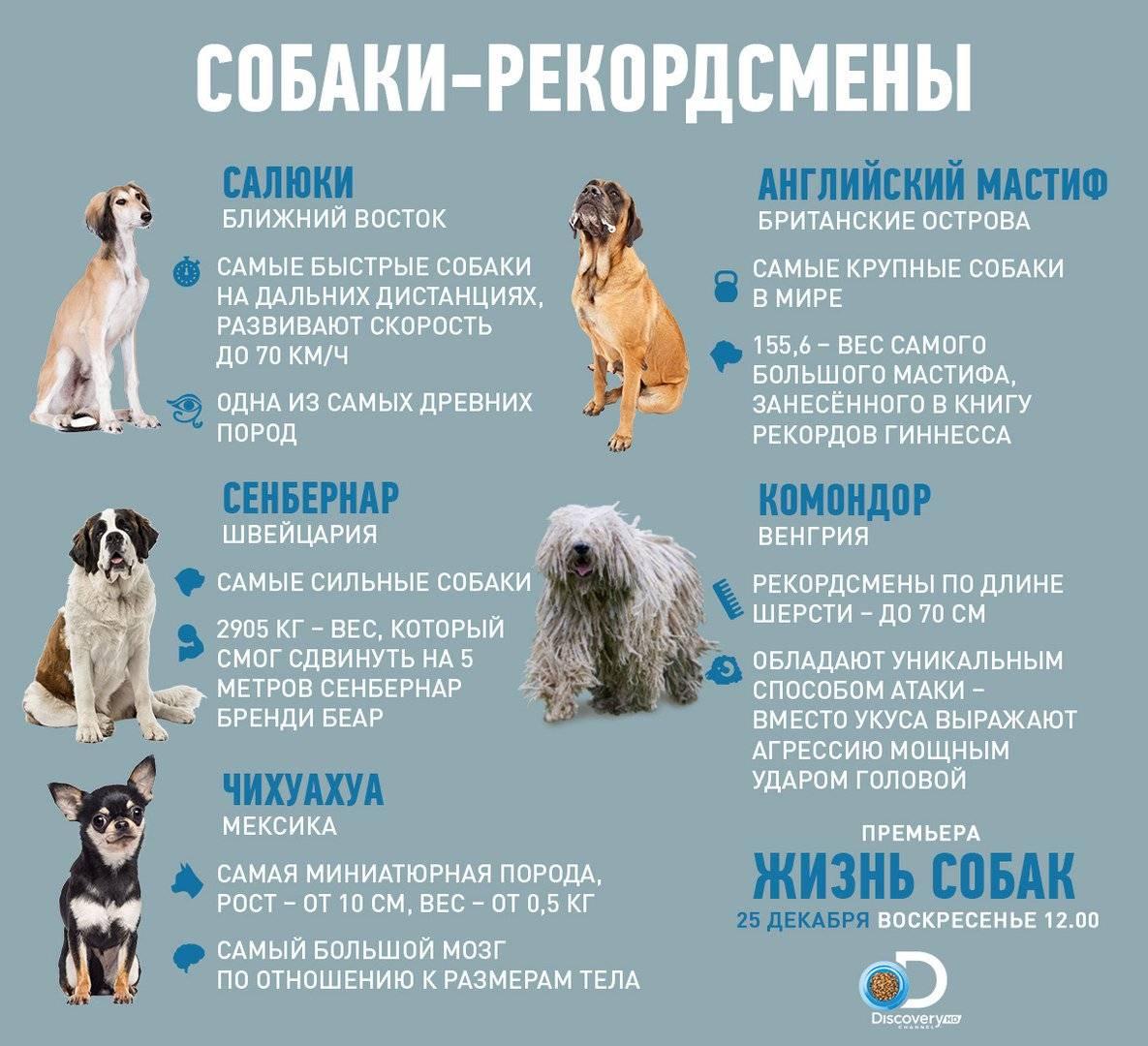 Сколько живут дворняги? продолжительность жизни собак в домашних условиях. сколько лет дворняги живут на цепи?