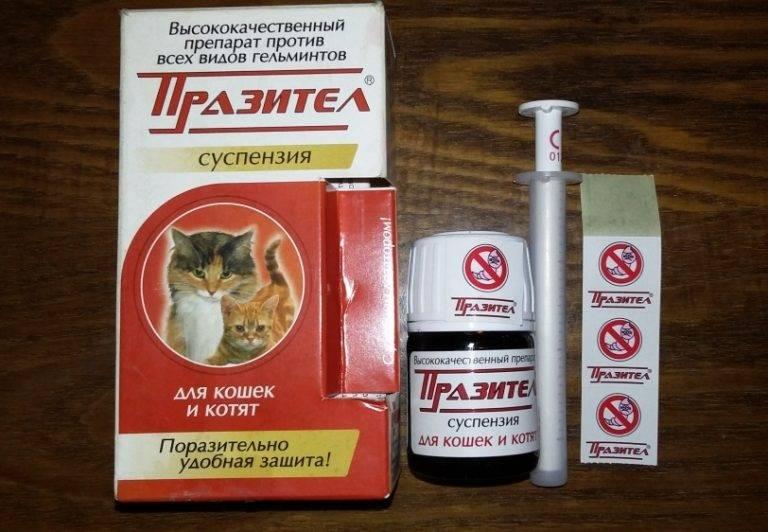 «празител» (суспензия против гельминтов) для кошек и котят: инструкция, дозировка