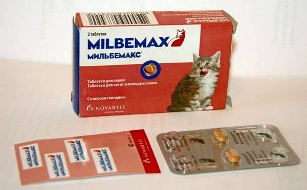 Как применять мильбемакс для кошек, его цена и отзывы