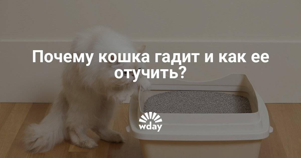 Почему кошка гадит на кровать: причины и методы борьбы с дурными наклонностями, что делать, чтобы кот не писал на мебель