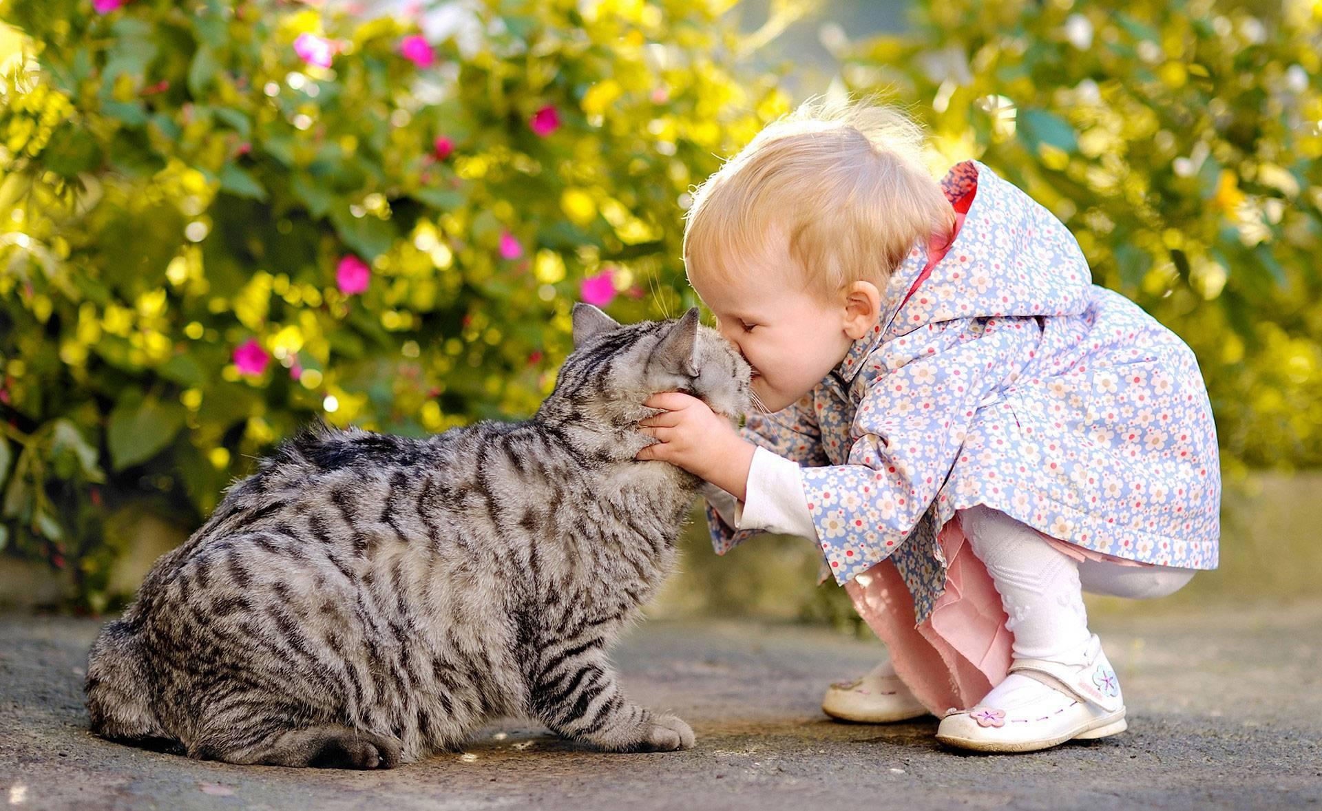 Как приучить кошку к рукам и ласке и приручить дикого котенка с улицы