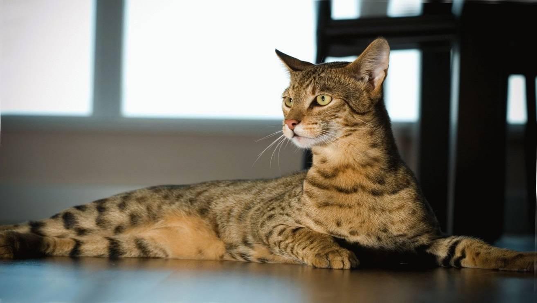 Самые добрые породы кошек и котов