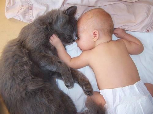 Ребенок и кот в доме, кот в доме и ребенок