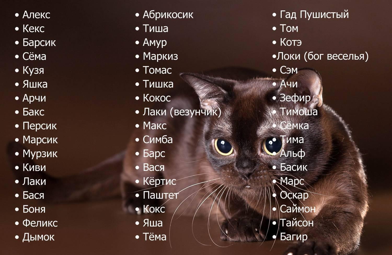 Имена для котов мальчиков - сотни красивых и прикольных кличек! | сайт «мурло»