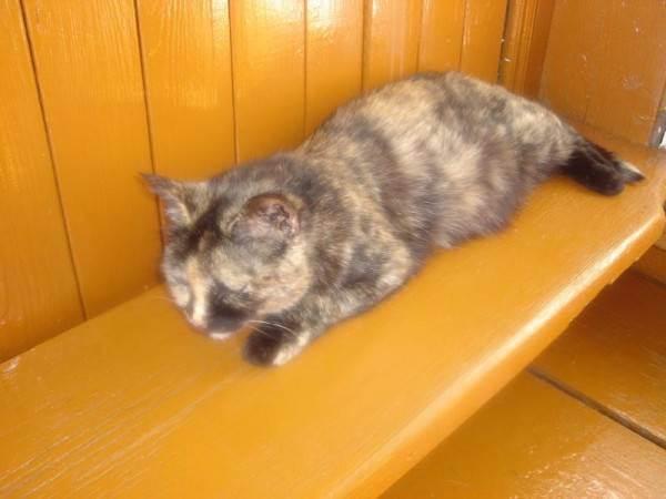 У кошки запор что делать в домашних условиях: народными средствами (быстро и эффективно)