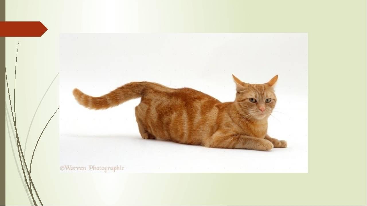 В каком возрасте кошка начинает просить кота - zhivomag
