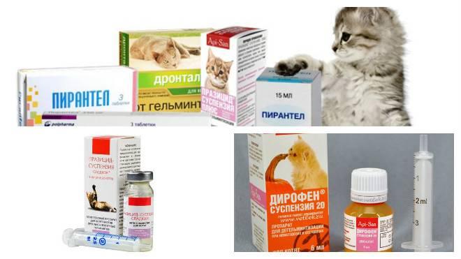 Понос у кота – как и чем лечить в домашних условиях?