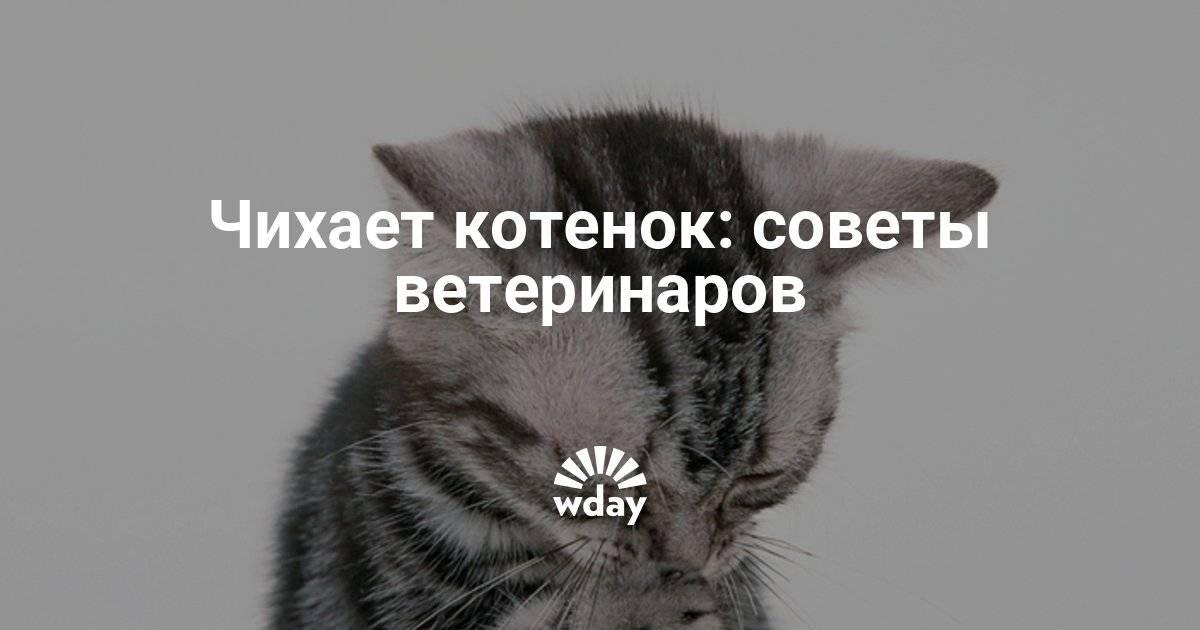 Почему кот кашляет и что при этом делать