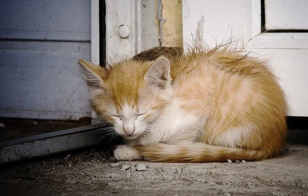 Почему кот плачет - причины и что делать