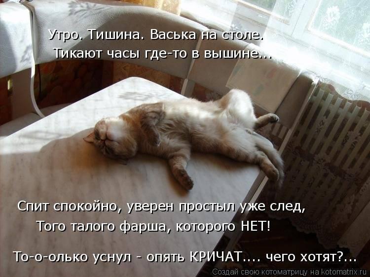 Причины, почему коты уходят умирать из дома