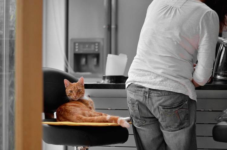 Чем нельзя кормить кошек: правила здорового питания